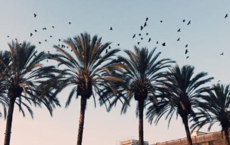 MY SUMMER TRIP TO ANAHEIM, CALIFORNIA