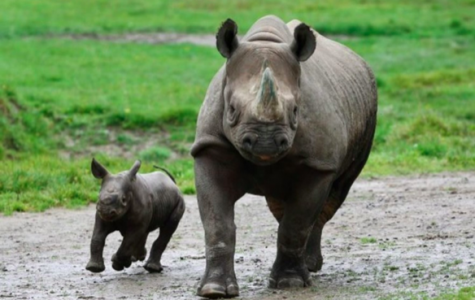 TOP 3 CRITICALLY ENDANGERED ANIMALS