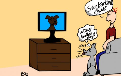 WHY DO DOGS WATCH TV?