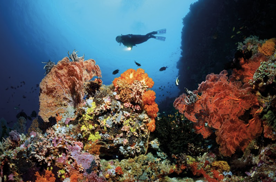SURPRISING GREAT BARRIER REEF DISCOVERY