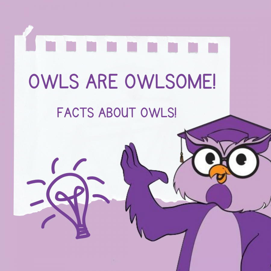 OWLS ARE OWLSOME!
