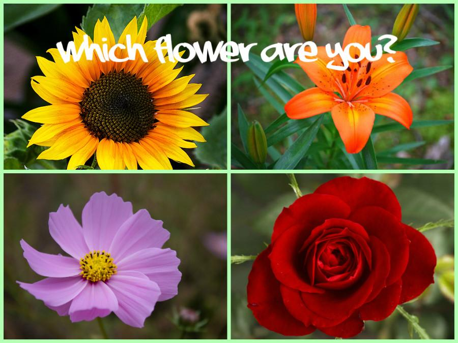 QUIZ: WHICH FLOWER ARE YOU?