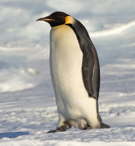 PENGUIN POOP SPOTTED FROM OUTER SPACE