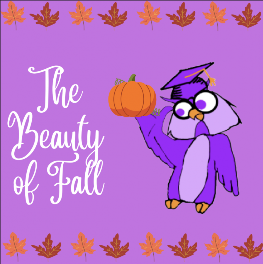 THE BEAUTY OF FALL